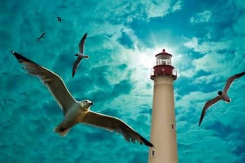 Popular Photography Seagulls Award 2009